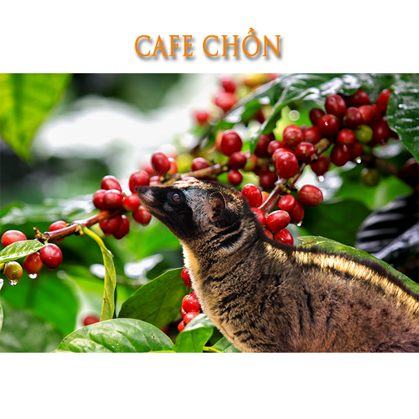 CAFE-chon