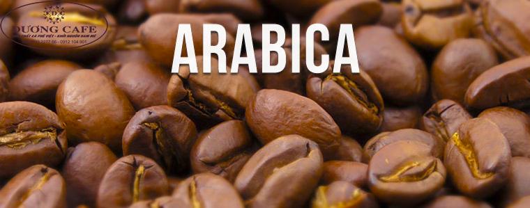 arabica-duong-cafe