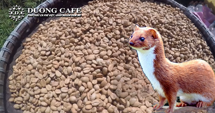 Cà pho chon Duong Cafe